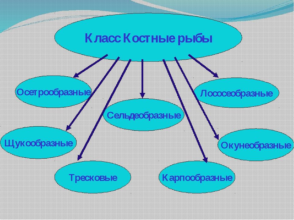 рыбы таблица класс характеристика