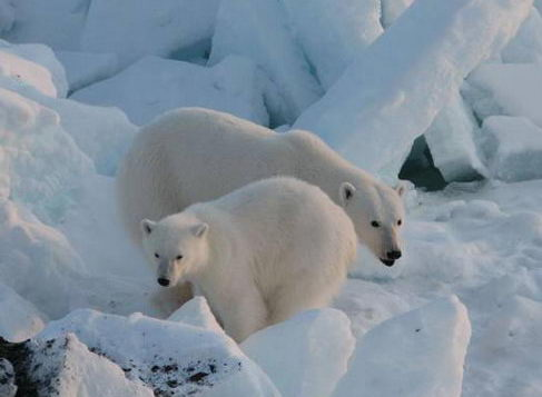 white_bear2.jpg