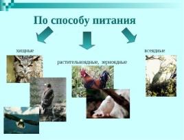https://fs00.infourok.ru/images/doc/201/229852/img8.jpg