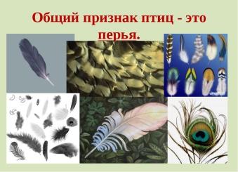 https://fs00.infourok.ru/images/doc/279/285119/img2.jpg
