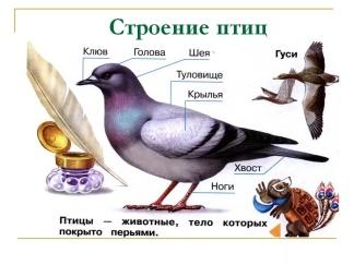 https://im0-tub-ru.yandex.net/i?id=f2f0d86d550d98dffaaac24b0553f28b-l&n=13