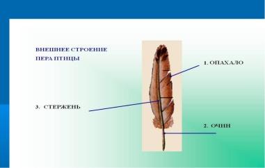 https://fs00.infourok.ru/images/doc/212/241820/img7.jpg