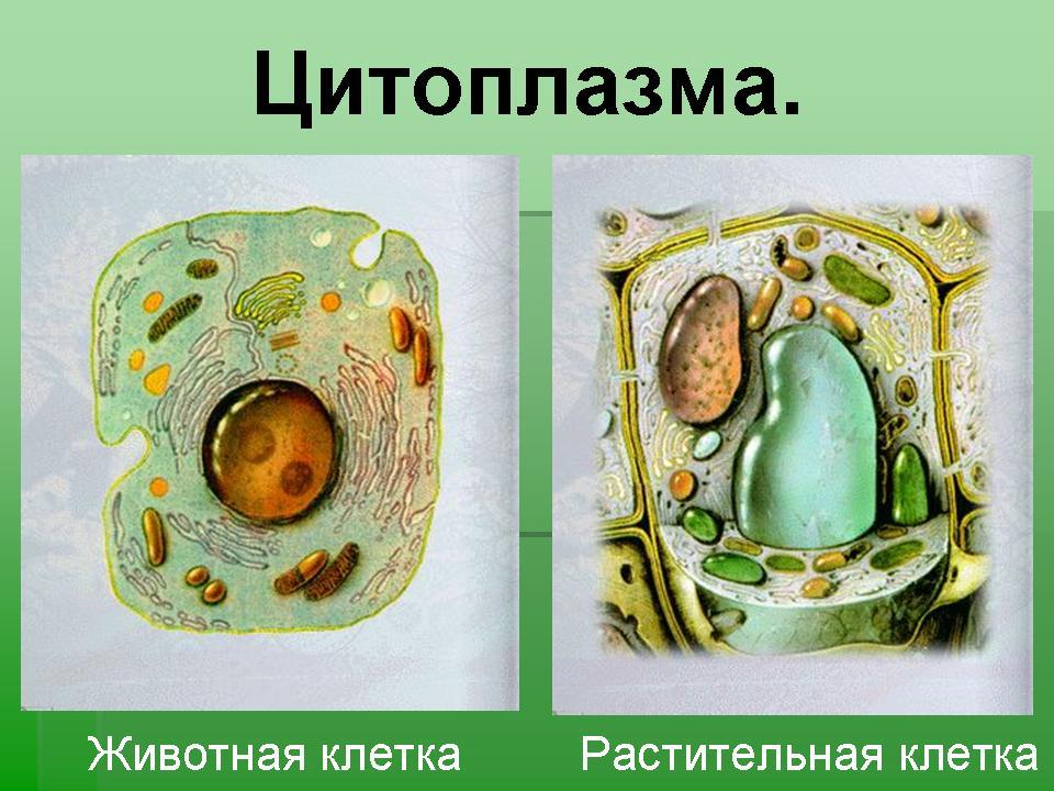 http://festival.1september.ru/articles/619027/presentation/26.JPG
