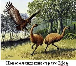 Картинки по запросу Клонирование гигантских птиц