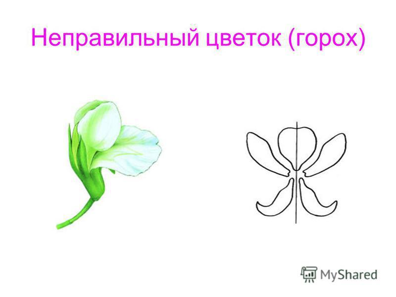 hello_html_m13479a2.jpg
