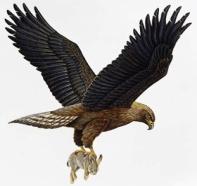 http://www.zooclub.ru/attach/birds/523.jpg