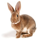 http://scienceblogs.com/pharyngula/files/2014/09/rabbit.jpg