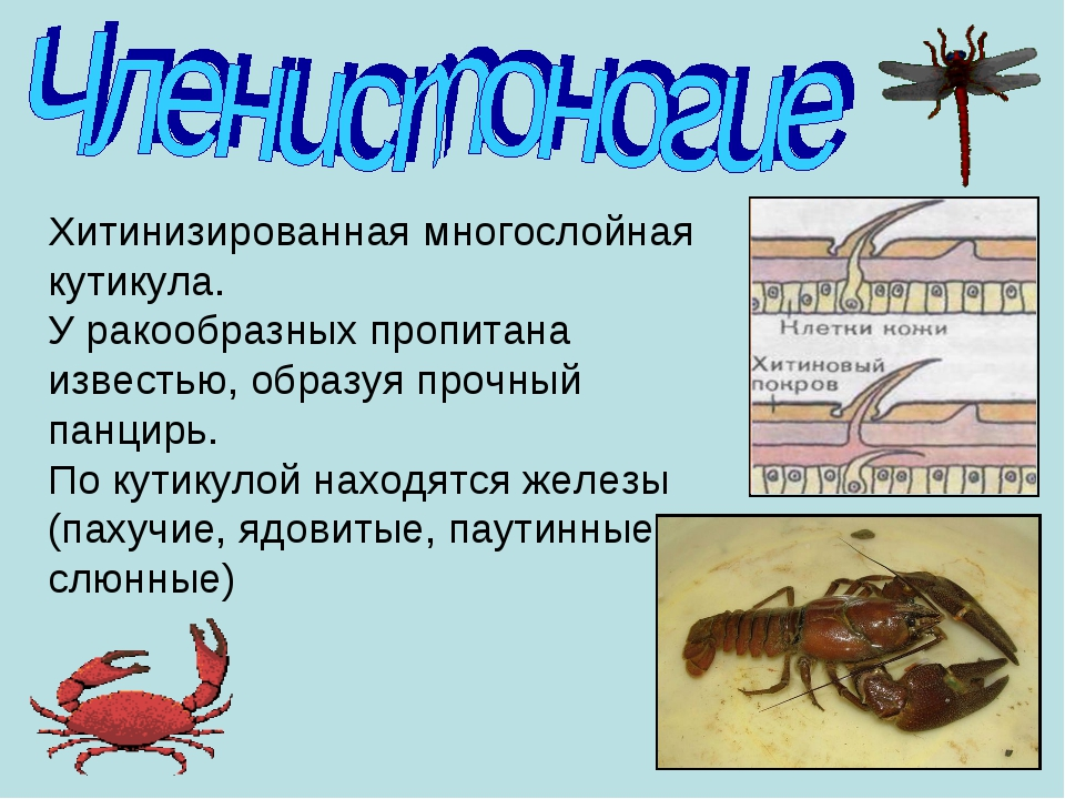 https://fs00.infourok.ru/images/doc/147/170363/img7.jpg