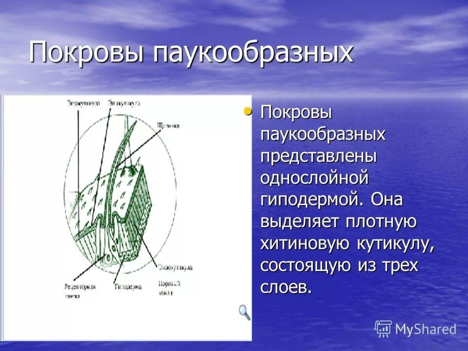 https://im0-tub-ru.yandex.net/i?id=b93f3df9b307e03cd0ec71a77bc85730-l&n=13