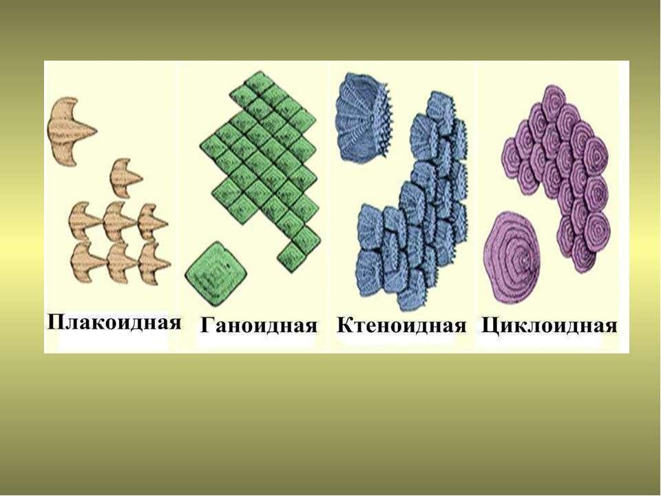 http://bigslide.ru/images/31/30229/960/img12.jpg