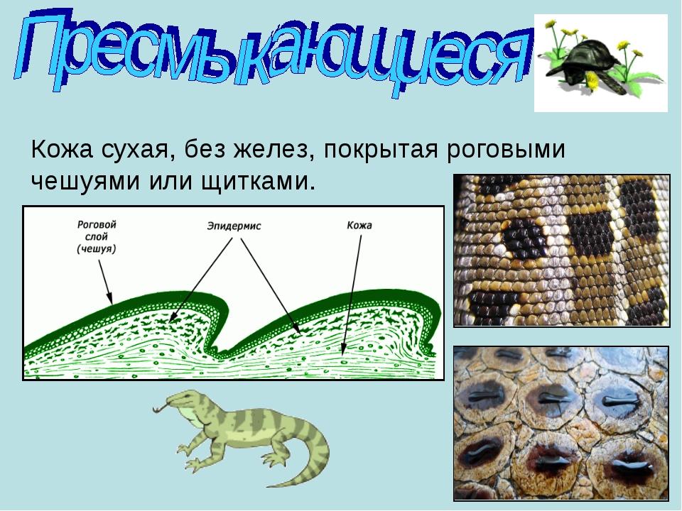 https://fs00.infourok.ru/images/doc/147/170363/img10.jpg