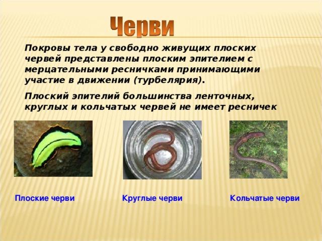 https://arhivurokov.ru/kopilka/uploads/user_file_56ab2600d371f/img_user_file_56ab2600d371f_6.jpg