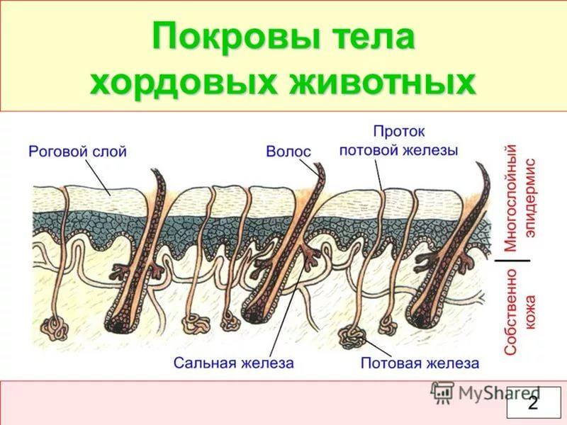 https://im2-tub-ru.yandex.net/i?id=a1c1ea37d78ef7997b576f02477f050d-l&n=13