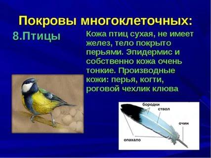 https://im3-tub-ru.yandex.net/i?id=84d67609489d4e7a9a100fa3e2b1e15b-l&n=13