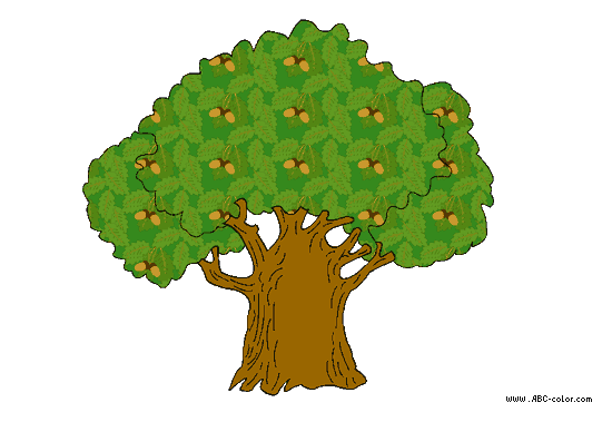 http://www.abc-color.com/image/coloring/trees/001/oak/oak-picture-color-2.png