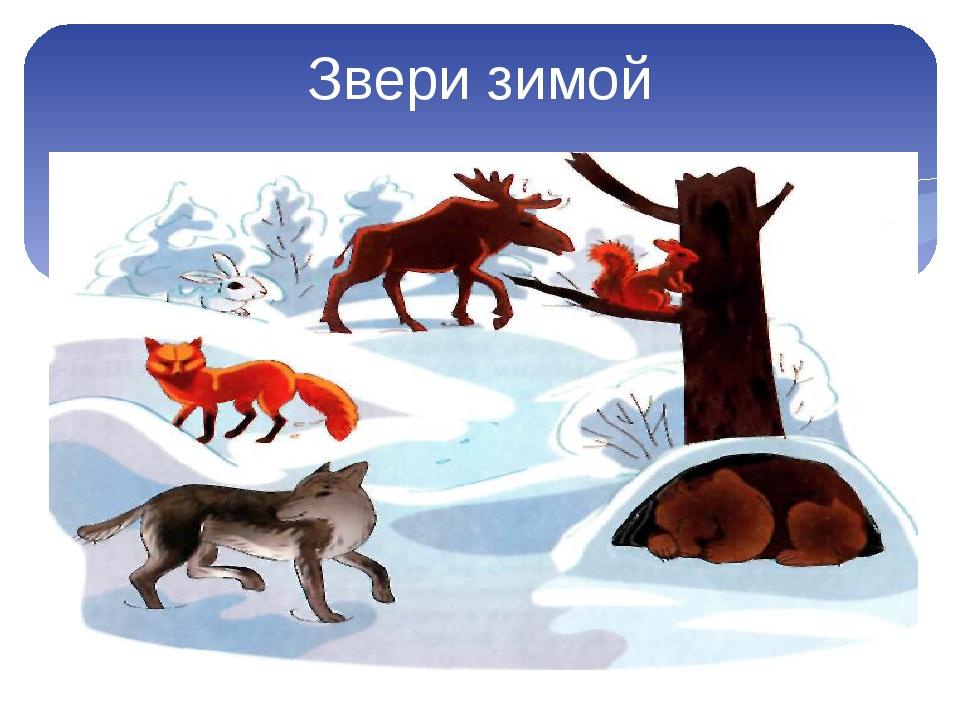 уникально где зимуют дикие животные картинки человек реалистичный