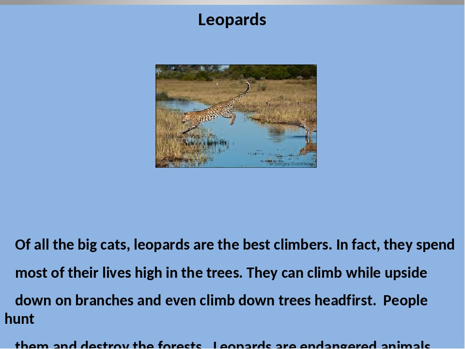 Leopards Of all the big cats, leopards are the best climbers. In fact, they s...
